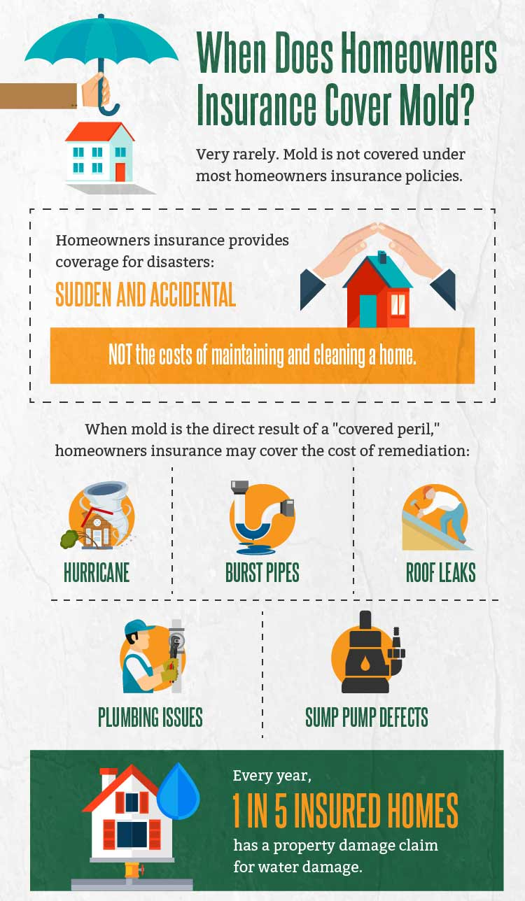 Household Mold Infographic