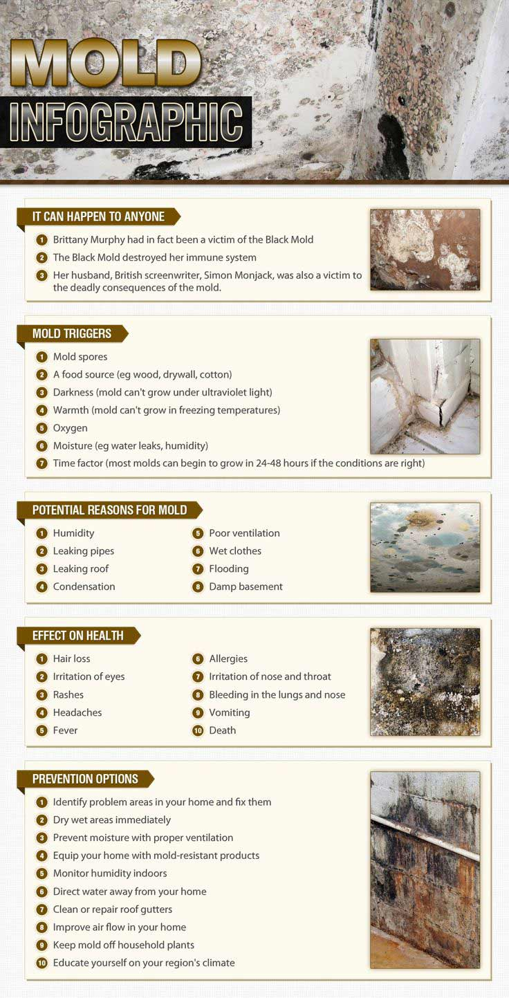 cleanup of household mold